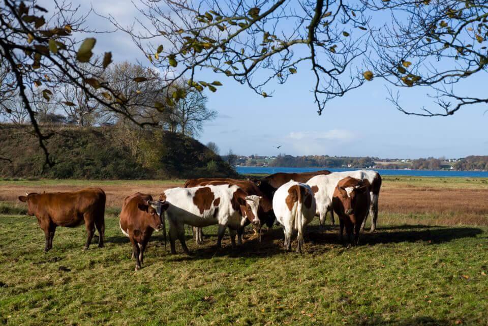 Landbrug landbrugsjord traktose naturli