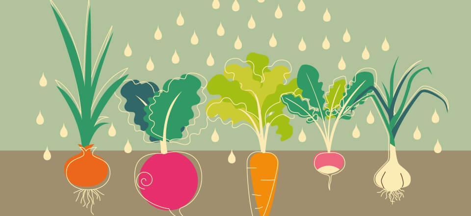 Lær at gendyrke dine grøntsager – det kan gøres året rundt