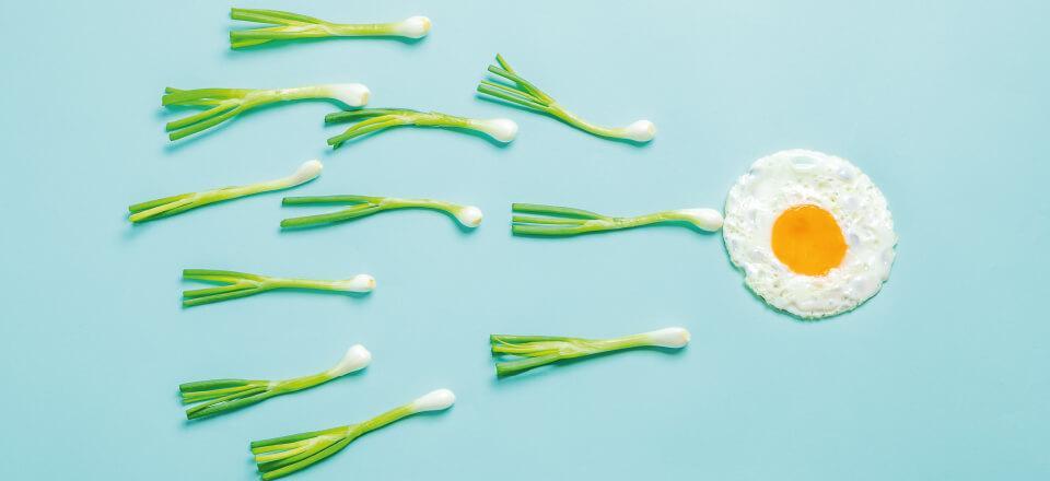 Mænds fertilitet kan forbedres – også med kosttilskud