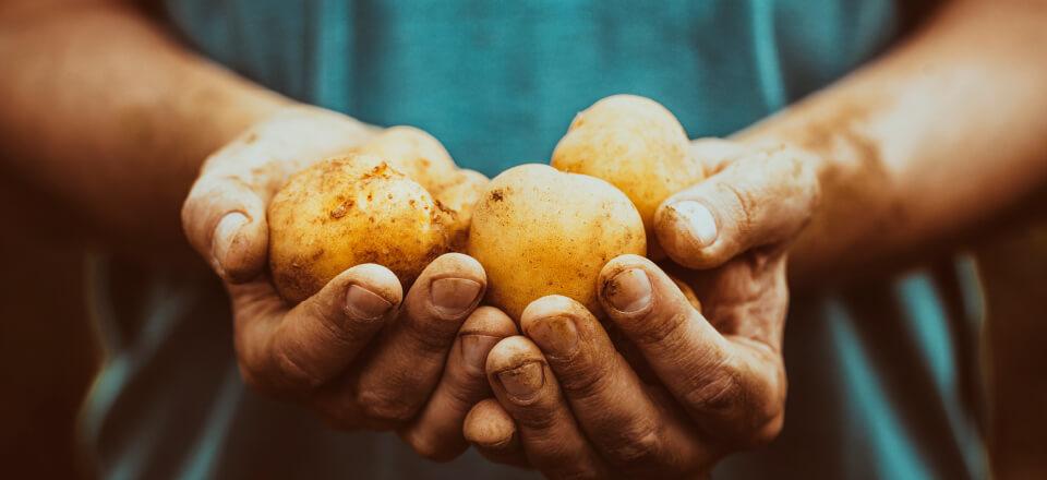 Bæredygtighed, kartofler og madspild