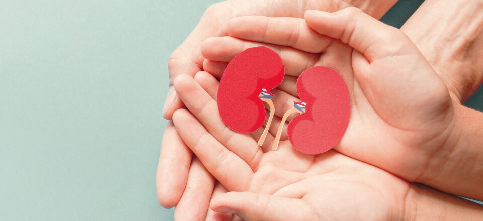 En hjælpende hånd til dine nyrer